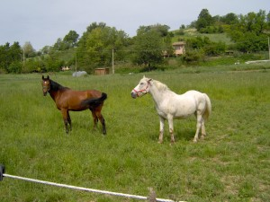 horse riding holidays le marche italy